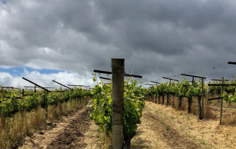 A view of rain clouds over Hyde Vineyard in Carneros